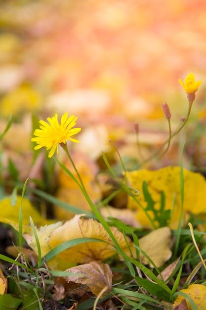 秋の草原の乾燥した植物 Premium写真