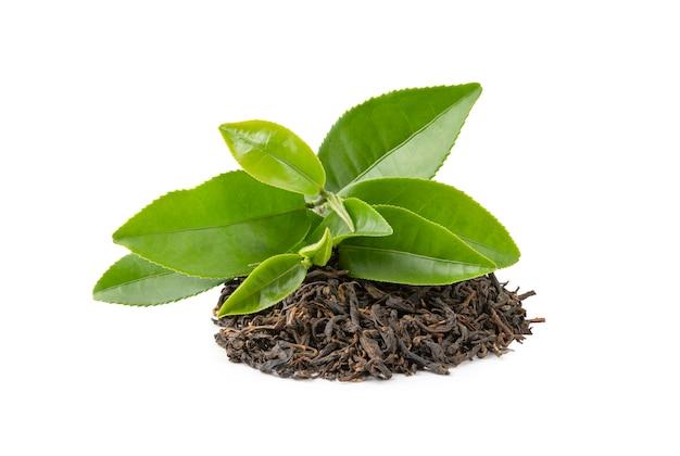 緑の葉の乾燥茶 Premium写真