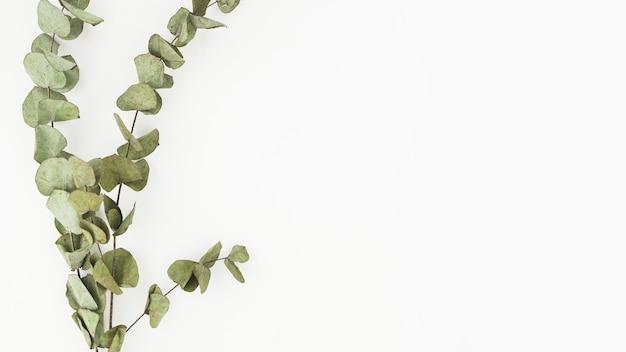 Dry twigs on white background Free Photo