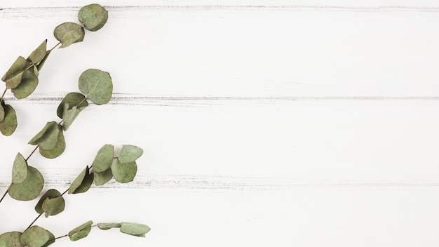 Dry twigs on white wooden background Free Photo
