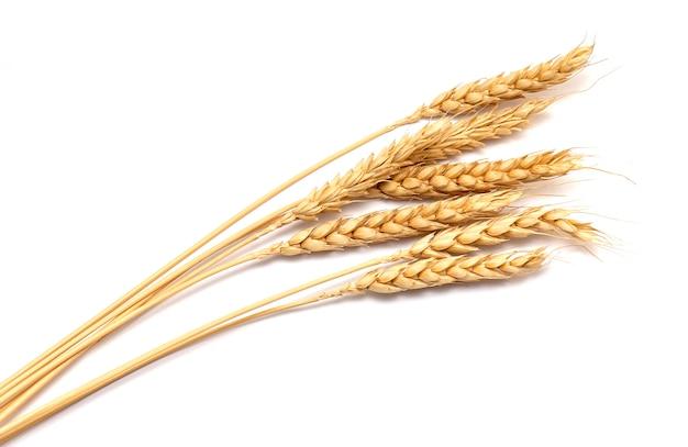Колосья сухой пшеницы, изолированные на белом Premium Фотографии