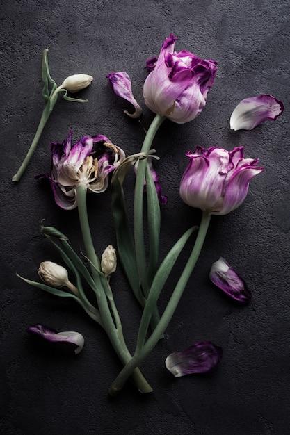 枯れた紫色のチューリップ Premium写真