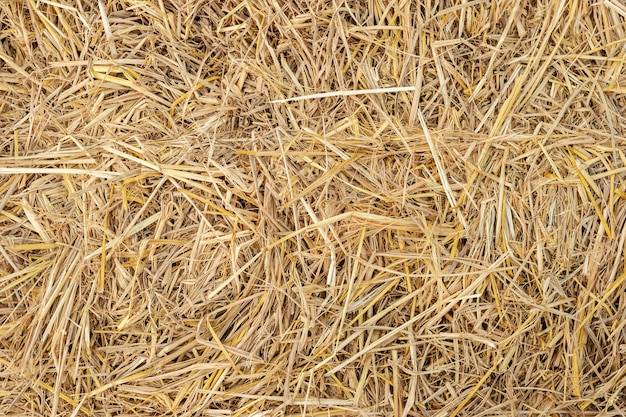 Dry yellow straw grass background texture closeup wallpaper. Premium Photo