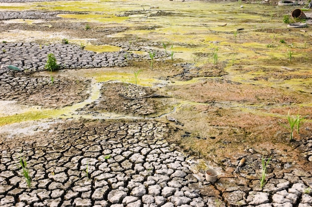Drying dirty wasteland with cracked surface due to global warming Premium Photo