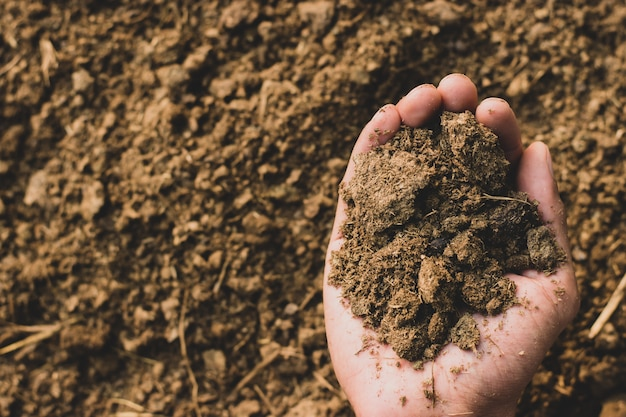 Dung or manure in the hands. Premium Photo