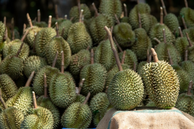 Durian composition beautiful positions in fruit orchards from thailand. Premium Photo