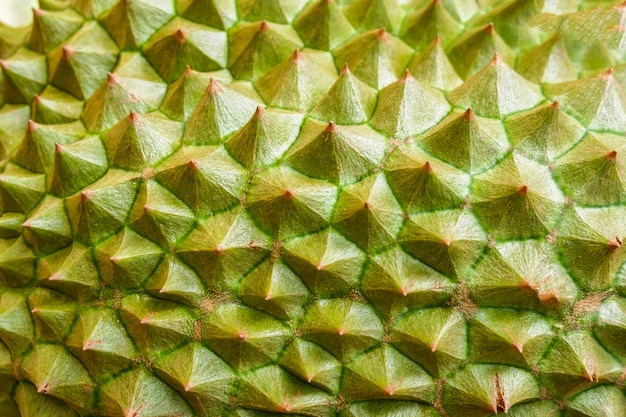 Durian skin / close up of  tropical fruit durian texture background Premium Photo