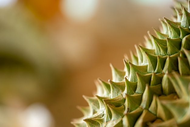 Durian thorns close up are seen near the details clearly. Premium Photo