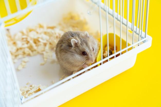 タビキヌゲネズミは檻の中で食べる。 Premium写真
