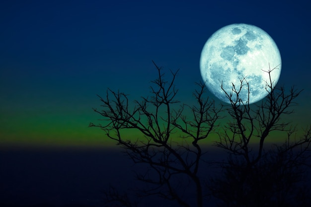 Dying grass full moon and silhouette dry trees in the sunset dark green blue sky. Premium Photo