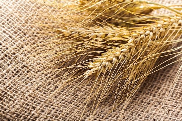 Ears of wheat on a sackcloth Premium Photo