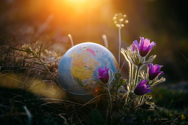 Earth globe in the grass next to a beautiful purple flowers close up. awakening of the planet and the first spring flowers. Premium Photo