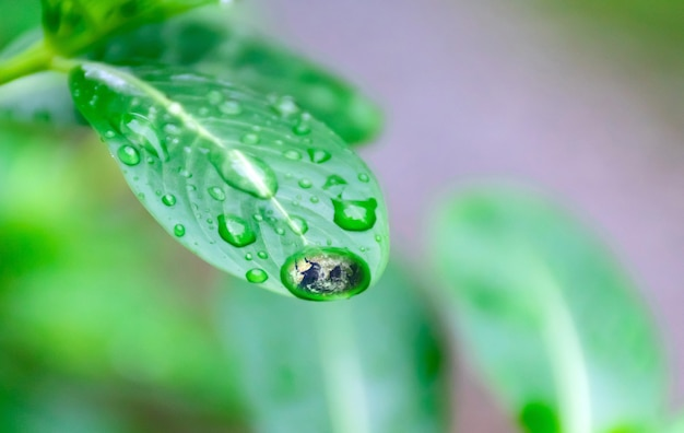 The earth water on the green leaves ecology and environment of earth Premium Photo