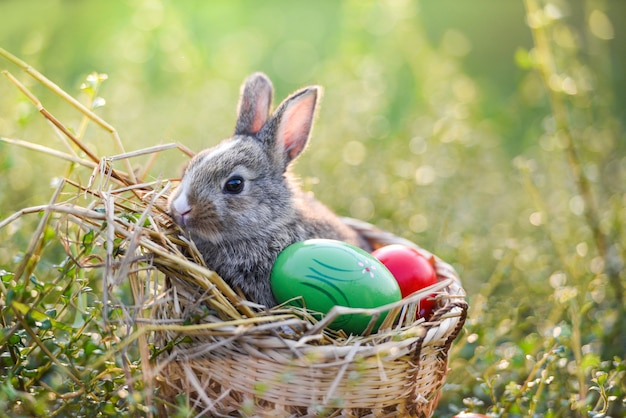 Easter bunny and easter eggs rabbit sitting on basket grass Premium Photo