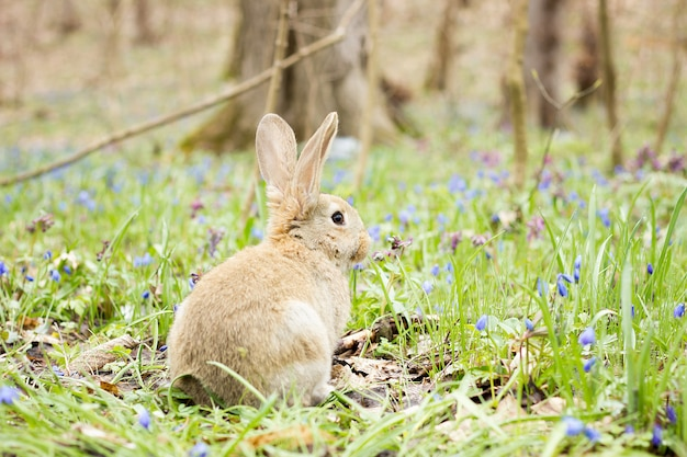 Easter bunny on a flowering meadow. hare in a clearing of blue flowers. Premium Photo