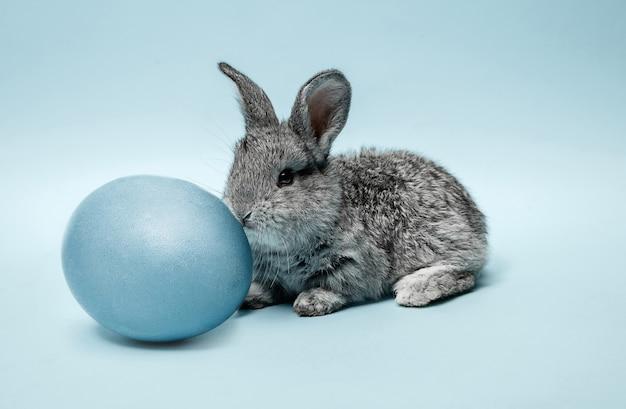 青に青い塗られた卵とイースターバニーウサギ 無料写真