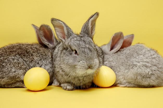 黄色に塗られた卵とイースターバニーウサギ 無料写真