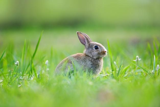 牧草地に茶色のウサギと春の緑の草の背景に屋外で飾られたイースターのウサギは、祭りのイースターの日-自然にかわいいウサギの装飾 Premium写真