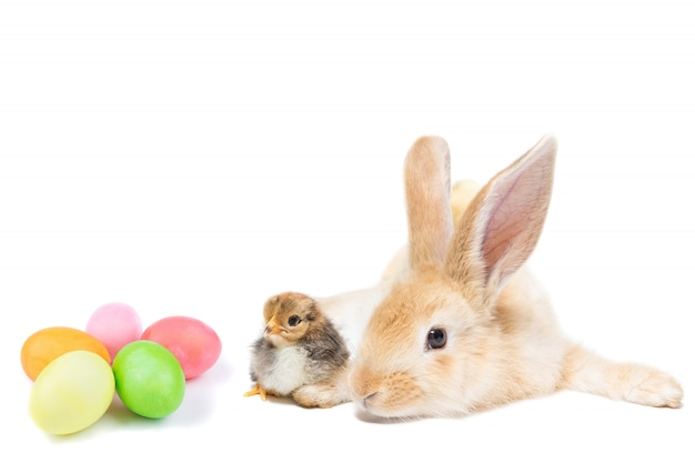 Easter bunny with chicken Premium Photo
