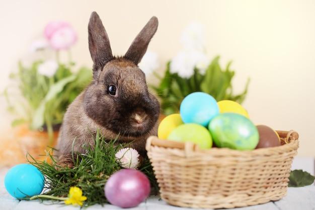 Easter bunny Premium Photo