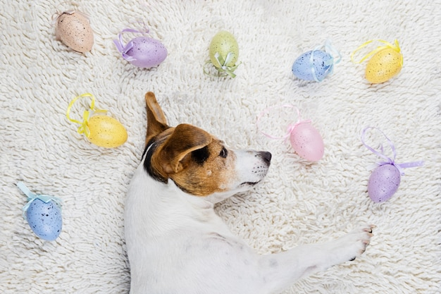 Easter eggs with funny puppy in white rug Premium Photo