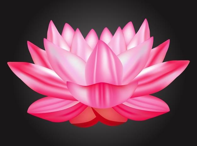 download 5d lotus flower - photo #27