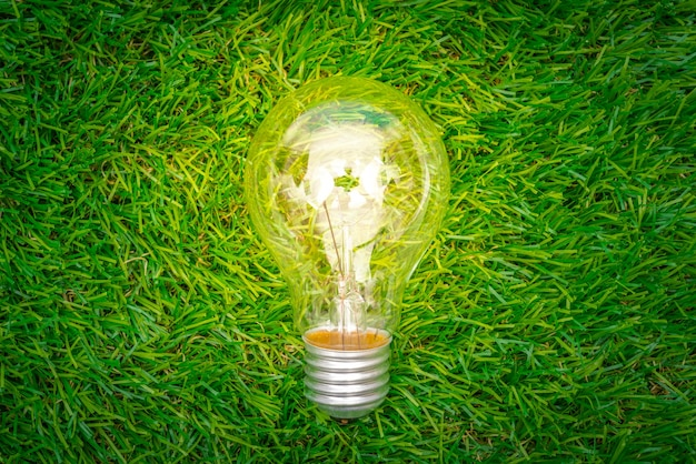 Eco concept - light bulb grow in the grass Free Photo