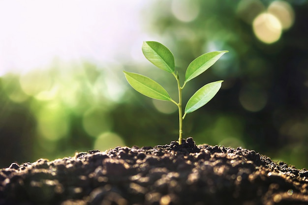 Eco earth day concept. tree growing in nature with morning light Premium Photo