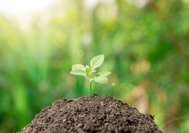 Ecology concept and environment of plant a tree growth Premium Photo