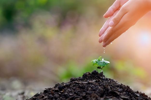 Ecology concept Premium Photo