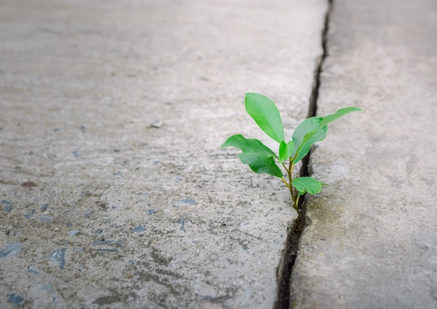 Ecology plant tree and environment drought growing on cracked street Premium Photo