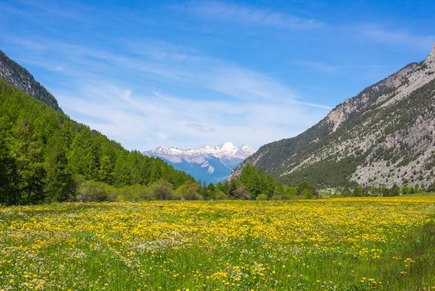 Зеленый и желтый цветущий луг идиллический горный пейзаж с заснеженной горной цепи ecrins горный массив массива в фоновом режиме. Premium Фотографии