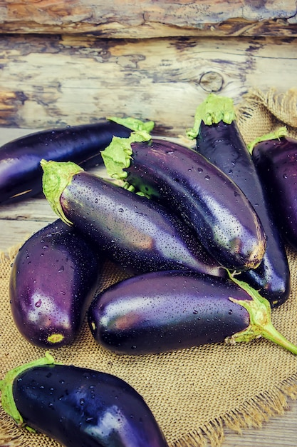 Eggplant. food. selective focus. nature garden food. Premium Photo