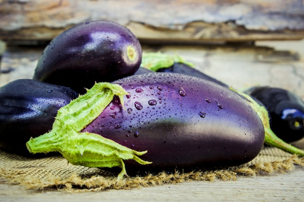 Eggplant. food. selective focus. nature garden food. Premium Photo