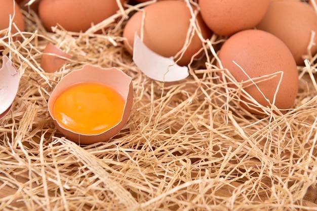 Eggs Premium Photo
