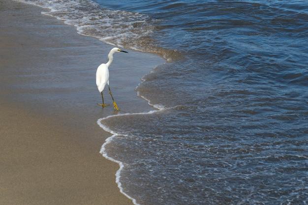Egret on beach、イラパ、ハリスコ、メキシコ Premium写真