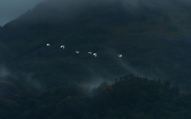 Egrets flying in the foggy mountains of western ghats, kanyakumari district, india Free Photo