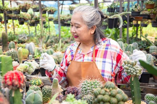高齢者の女性は、サボテンの鍋から雑草を引っ張ってクランプを使用します。 無料写真