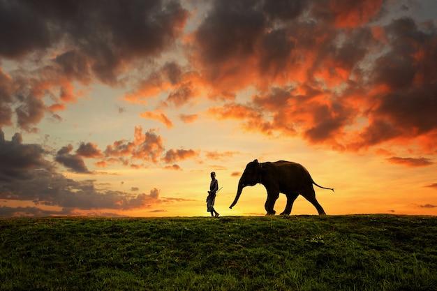 日の出、スリンタイの間にフィールドに象と男の故郷 Premium写真