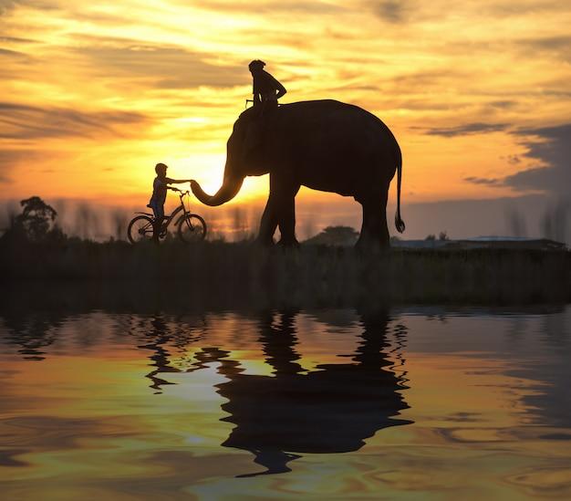 Elephant and child on bicycle during sunset, silhouette elephant on sunset,thailand Premium Photo
