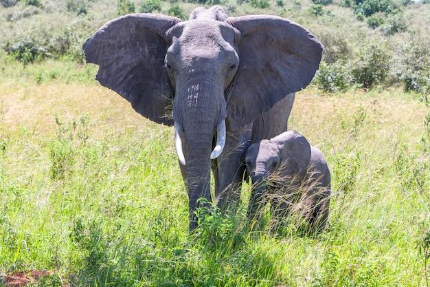 Elephant family walking in the savanna Free Photo
