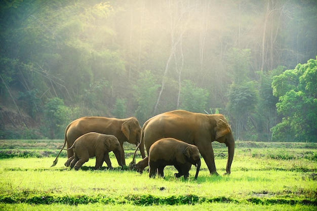 Elephant family walking through the meadow Premium Photo