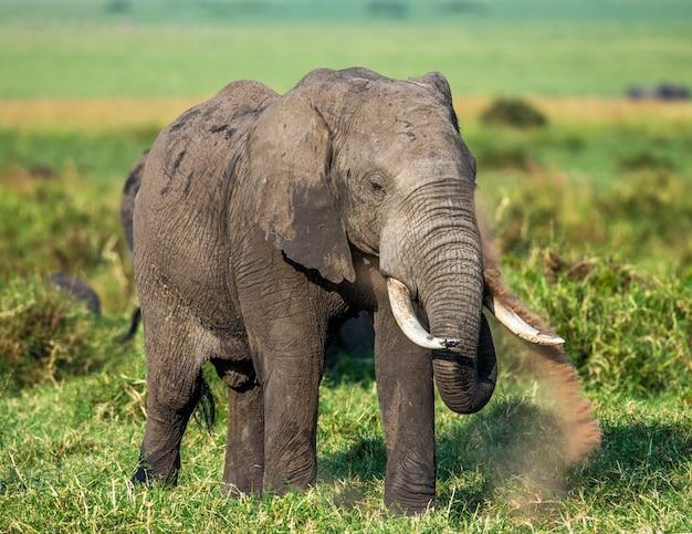 サバンナの象。 Premium写真