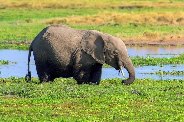 水中の象 無料写真