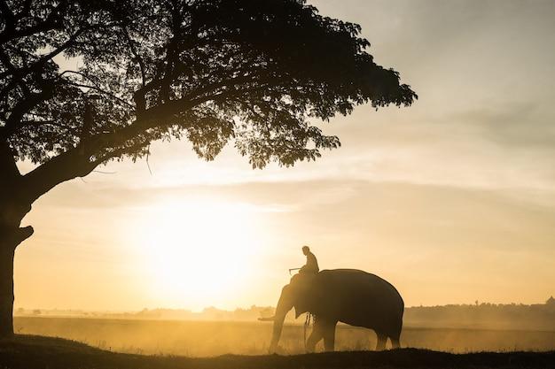 Elephant sihouette Premium Photo