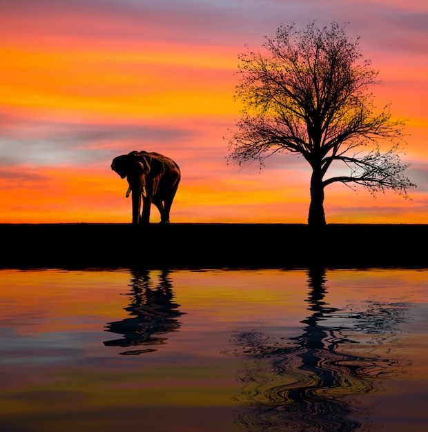 Elephant silhouette in the wild Premium Photo