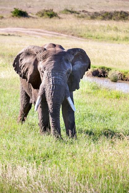 サバンナを歩く象 無料写真