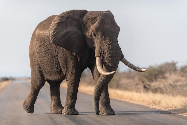 道を歩く象 無料写真