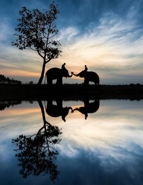 Elephant and water reflection Premium Photo