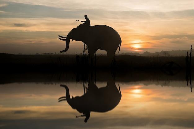 Elephant Premium Photo
